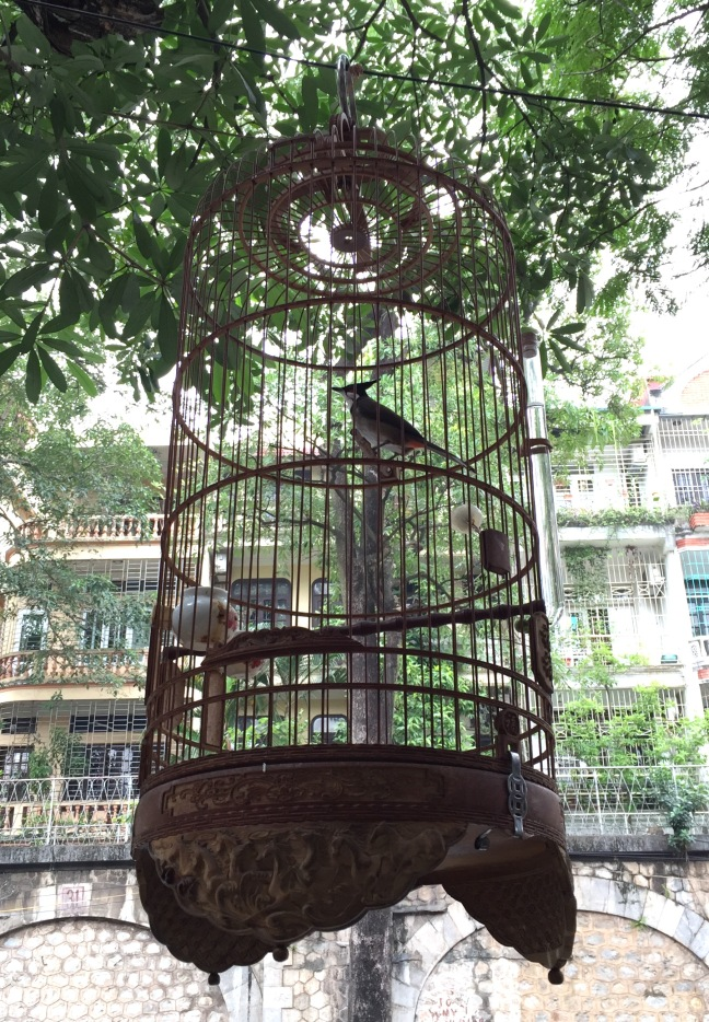 Birdcages adorn practically every doorway or business entryway. For luck, for show, and sometimes for sale. Often, because they hung so high, you heard them before you saw them... and often it was an incredibly sweet song they sang.